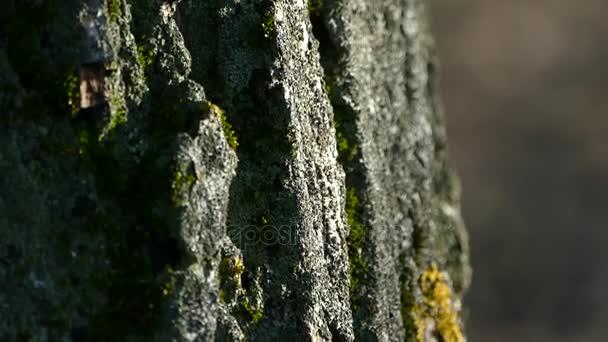 Textur der Rinde eines Baumes. die Rinde des Baumes ist mit Moos bedeckt.