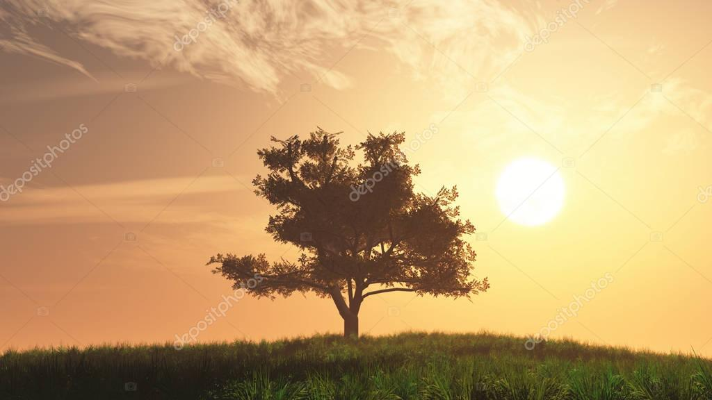 Lonely Tree on Summer Field in the Sunset Sunrise