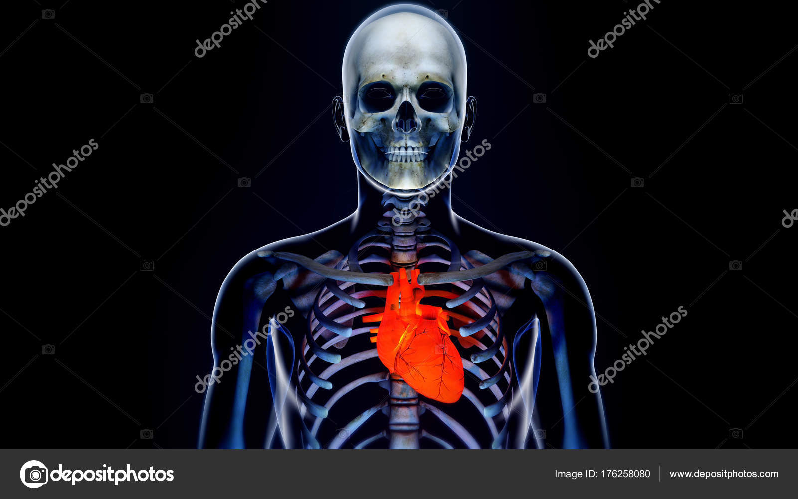 Human Body Transparent Heart Modern Anatomical Concept Stock Photo