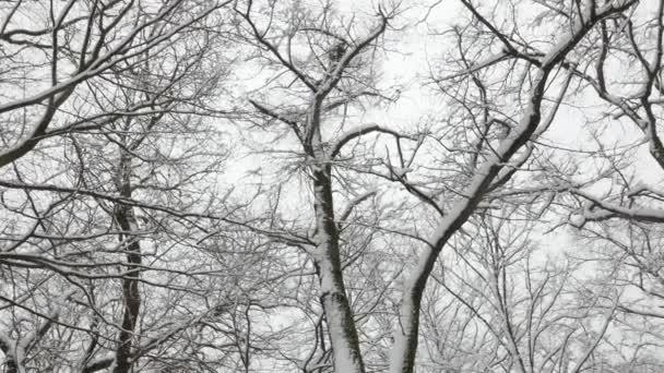 Zimní sněžení 4K a zasněžené šaty