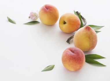 Fresh picked peaches with leaves and blossom on white background stock vector