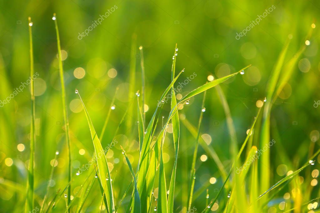 Background of green grass. Nature.