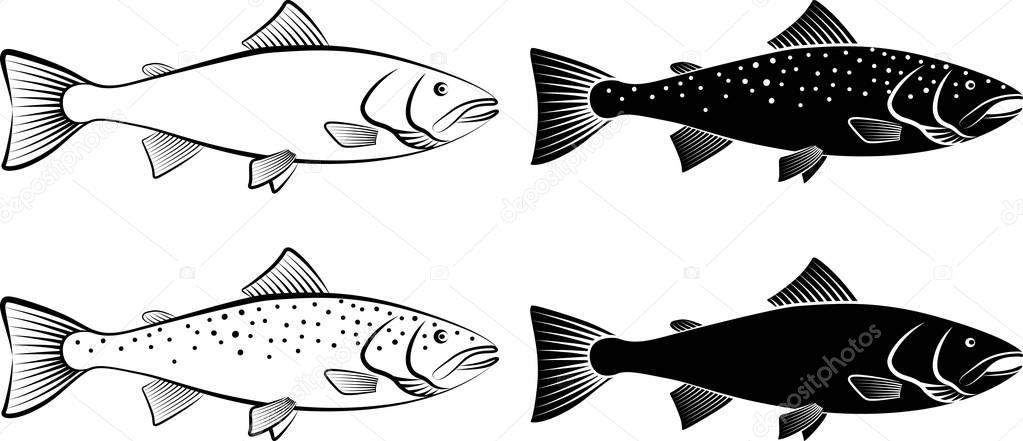 isolated salmon - vector illustration