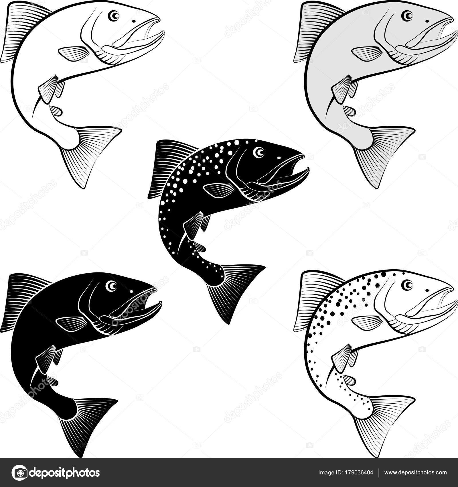 aislados salmón - ilustración vectorial — Archivo Imágenes ...