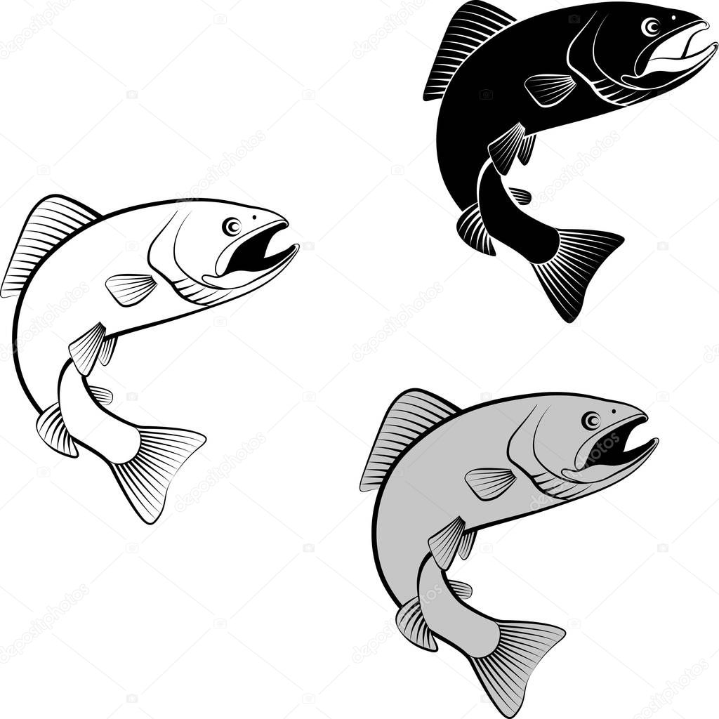 trout  - vector illustration