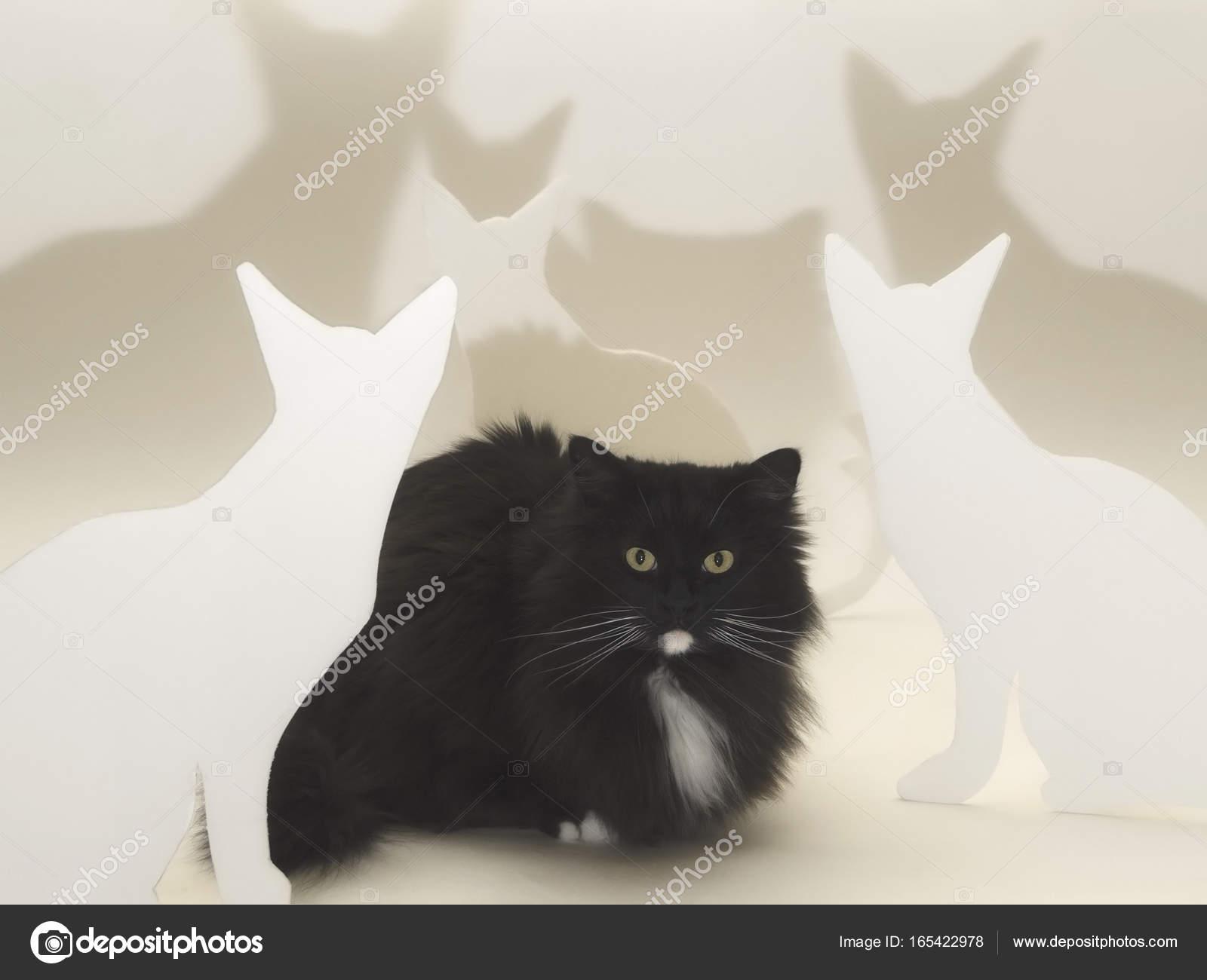 Czarny Kot Perski Siedząc Z Kształtami Biały Kot Zdjęcie Stockowe