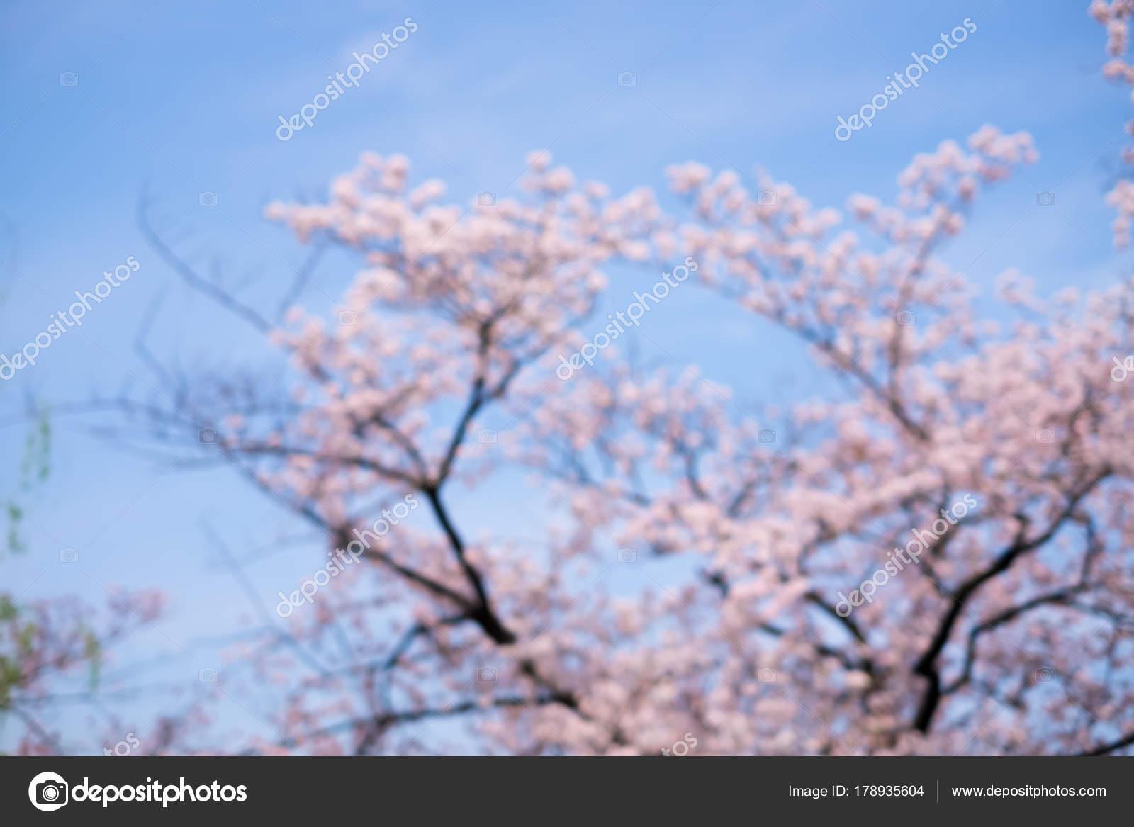Scene Fleur Cerisier Floue Tournee Japon Photographie Ryanking999