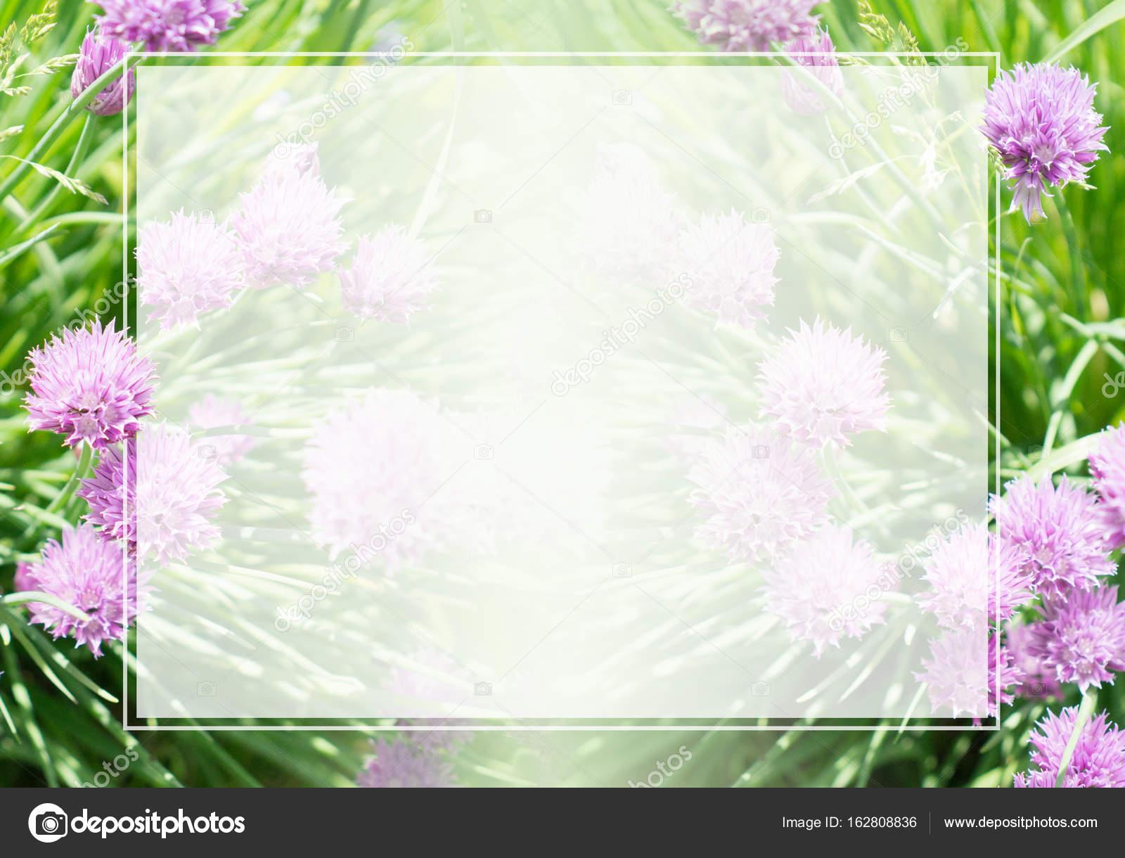 Rahmen und Rand auf dem Hintergrund von Rasen und Blumen — Stockfoto ...