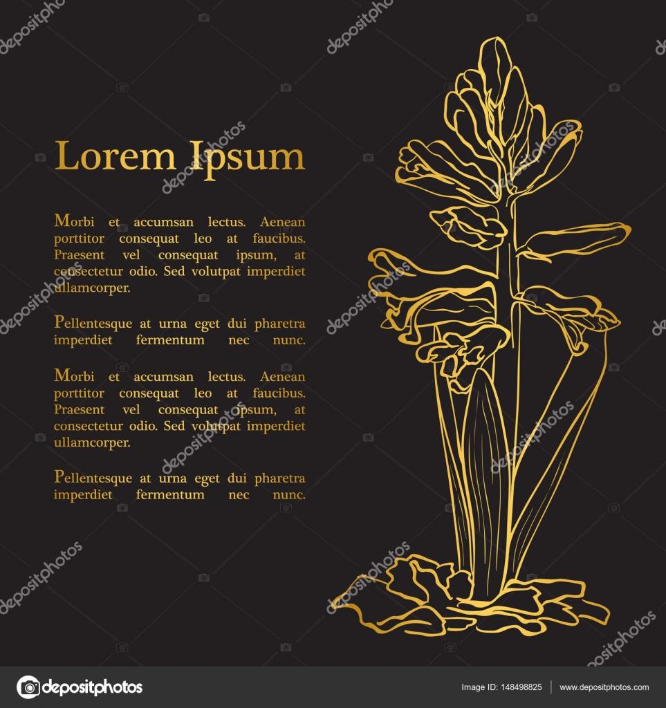 Garden hyacinth (Hyacinthus orientalis) — Stock Vector © werta.w ...