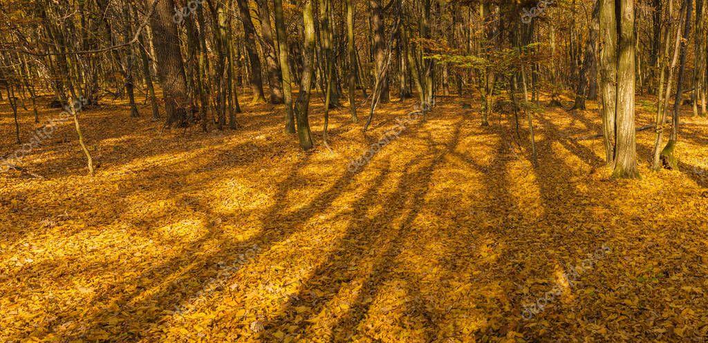 правила фотографирования через листву огромную массу
