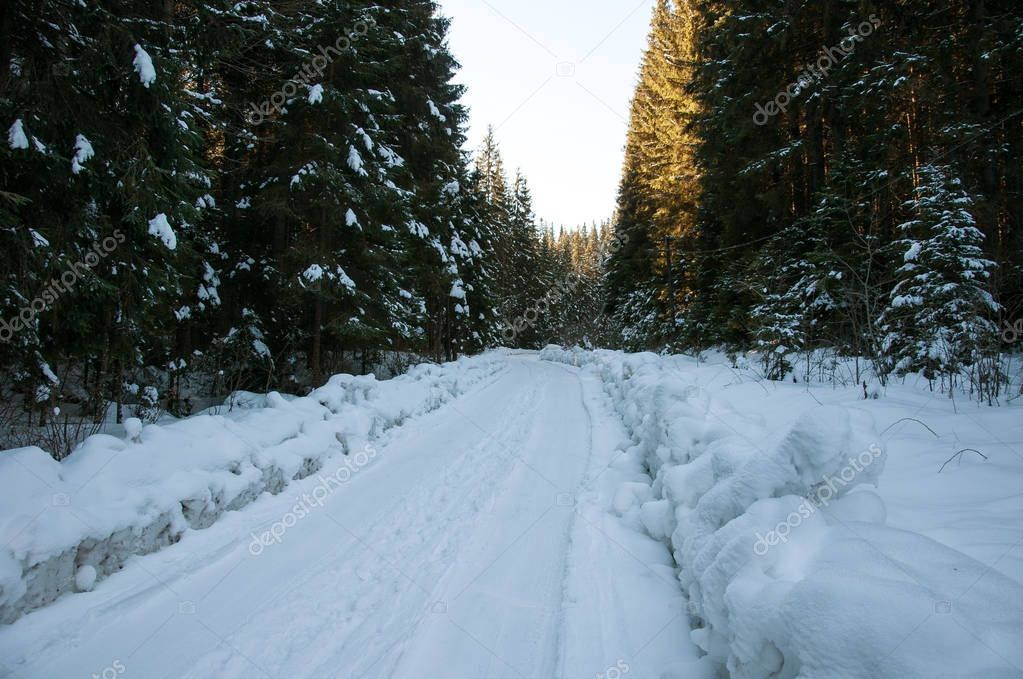 Winter road in the forest.