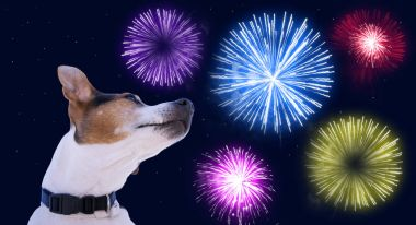 Safety of pets during fireworks concept