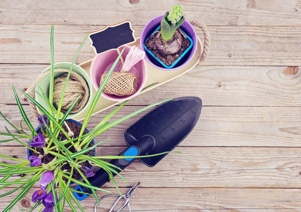Garden tools on wooden background and fresh flowers