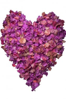 Isolated heart of bougainvillea leaves in the pink and the purple