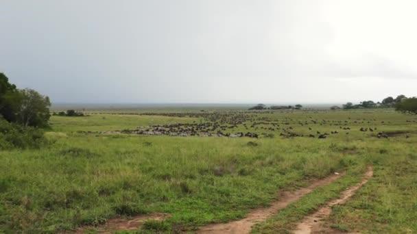 Pakoně a zebry v migraci