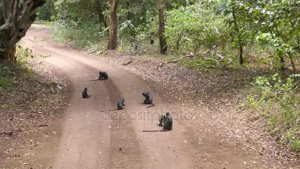 Blaue Affen auf der Straße im Lake Manyara Nationalpark mit einem grünen Affen