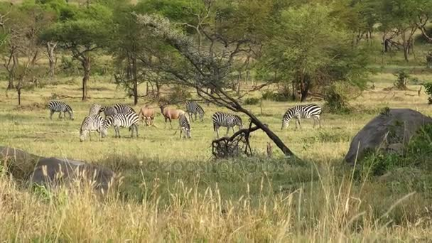 Zebra and Topi in the Serengeti
