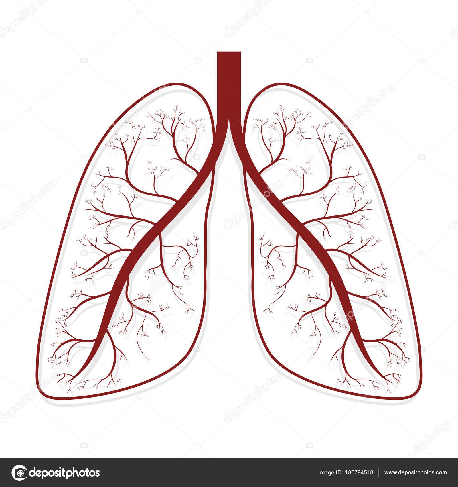 Lungen Menschliche Lunge Anatomie Symbol Vektor Illustration ...