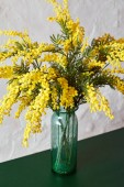 Fotografie Mimosa spring flowers in vase standing on the green table. Bouquet of beautiful yellow fresh mimosa. Easter and Mothers Day