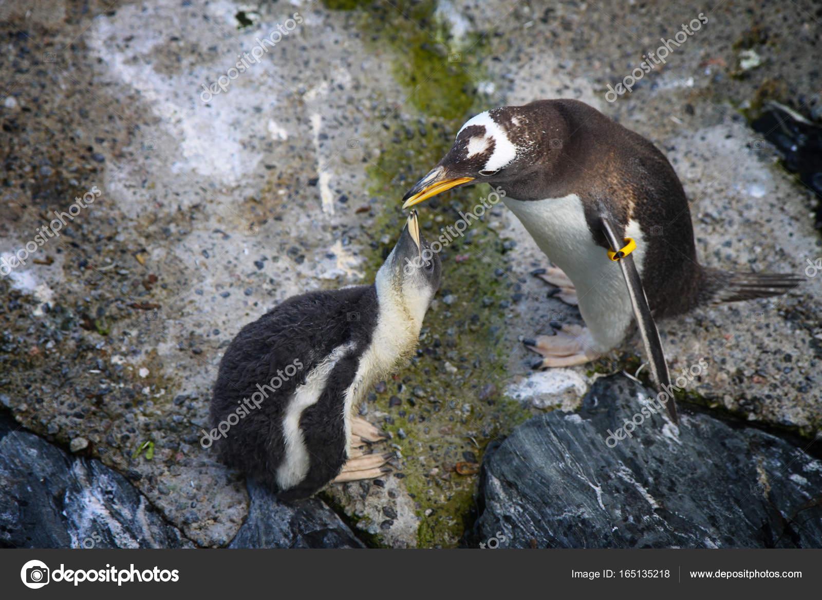 Pet Şişeden Anne ve Yavru Penguen Yapımı