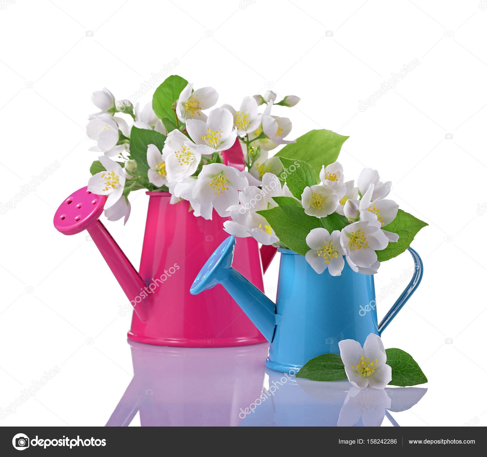 Bouquet of white jasmine flowers with leaves in pink and blue bouquet of white jasmine flowers with leaves in pink and blue watering cans isolated on white background photo by viktoriya89 izmirmasajfo
