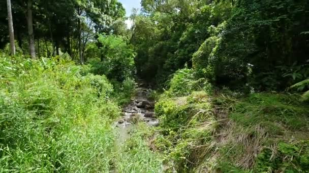 Slow moving Stream in Tropical Forest