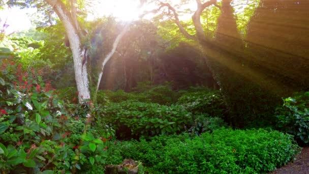 Pulsierender Sonnenstrahl in üppiger Waldlandschaft