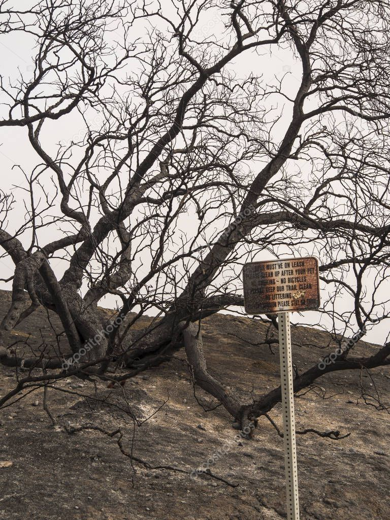burnt sign in park from recent wildfire