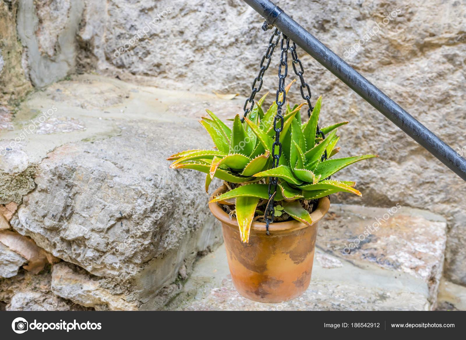 Doniczki Wiszące ścianie Kwiatami Mieście Valldemosa