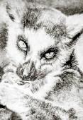 Fotografie Illustration made with digital tablet, lemur in sepia on vintage paper, handmade illustration