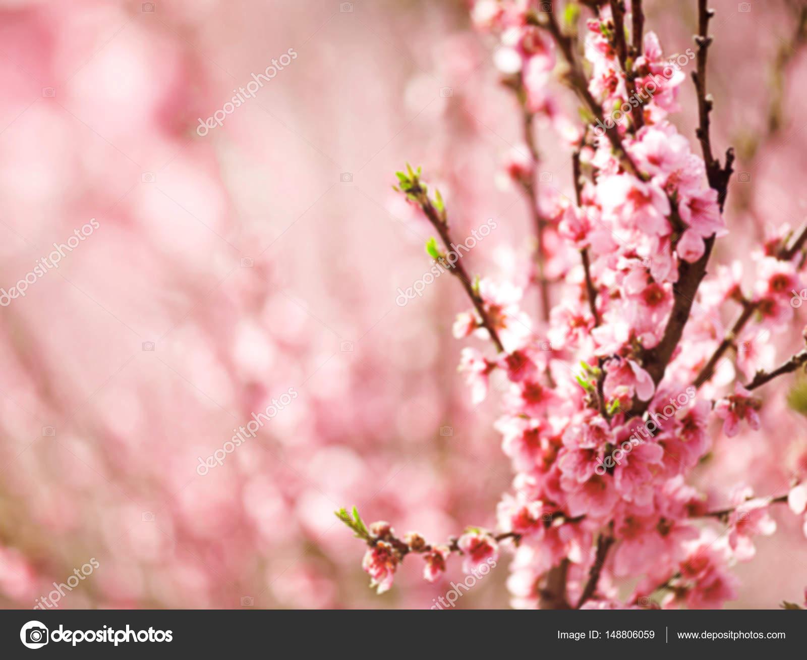 Branch Of Spring Peach Flower Stock Photo Olenakucher 148806059