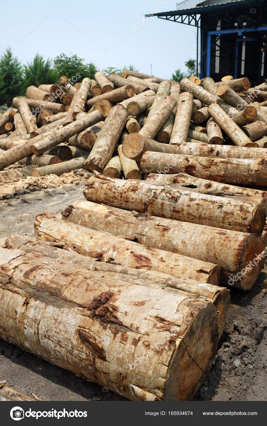 Pile Of Timber : Pile of timber wood log in a plywood mill factory — stock
