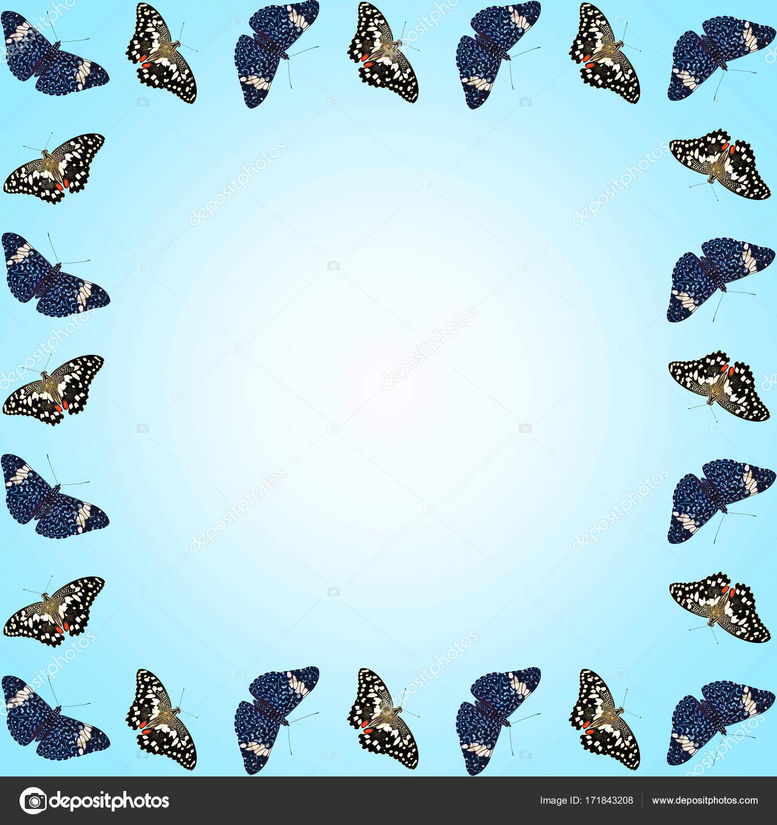 Marco de mariposas aisladas con espacio de copia sobre fondo azul ...