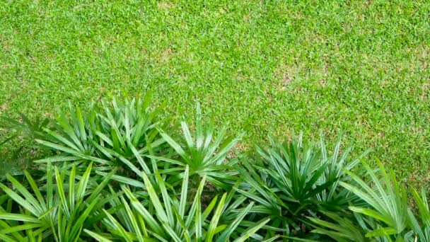 Exotic pointed leaves gently move over a fresh lawn. Bright tropical greenery against the background of the texture of the grass.