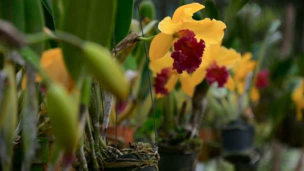 Nahaufnahme einer schönen gelben Orchideenblüte im Garten