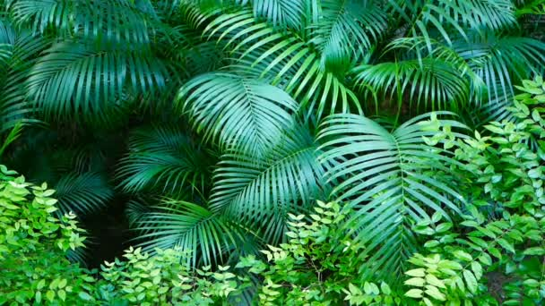 Exotic dark green leaves of tropical palm trees swing in the wind