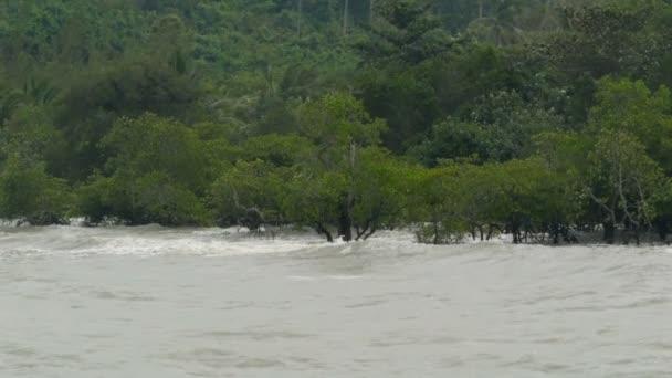 Wellen Rollen an den überfluteten Wald