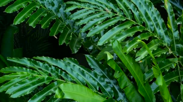 Beautiful green leaves blowing in the wind in tropical jungle rain forest