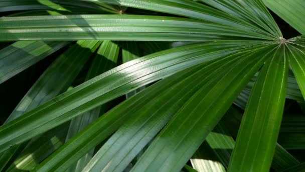 Bright juicy exotic tropical greens in the jungle forest equatorial climate