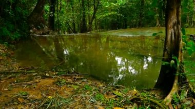 Bright colorfull natural pool in exotic rainforest. Tropical jungle landscape