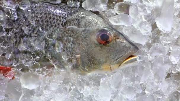 Silver chilled fish lay on the ice n the live menu of luxury sea food restaurant