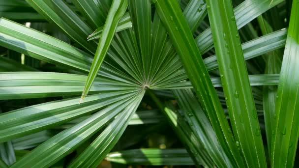 Lédús egzotikus trópusi zöldje a dzsungel erdő egyenlítői éghajlat