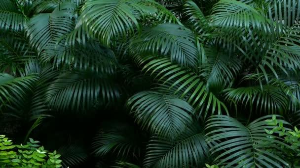 Brillante succose esotici tropicali verdi nel clima equatoriale foresta giungla
