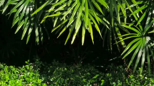 Jasné šťavnaté exotické tropické zelení v lese džungle Rovníkové klima