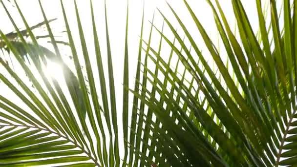 Kokosové palmy koruny proti modrému slunečnému nebi s výhledem ze země. Tropické cestování pozadí krajina na pobřeží ráje. Letní pláž příroda scéna se zelenými listy houpat ve větru