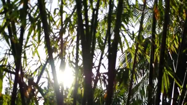 Homályos közeli, fényes lédús egzotikus trópusi dzsungel levelek textúra háttér, másolás. Buja lombozat a kertben. Absztrakt természetes sötétzöld növényzet háttér minta, vad nyári esőerdő.