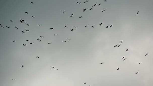 Zdola se proti šedé mračné obloze vznášelo hejno čápů. Siluety vznášejících se ptáků jako symbol svobody a přírody. Pojetí ochrany životního prostředí a ohrožených druhů zvířat