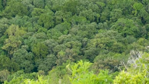 Zöld egzotikus fák koronái a trópusi esőerdőkben, föntről fúj a szél. Fényes, egzotikus trópusi dzsungel. Buja lombozat elvont természetes sötét zöld növényzet háttér.