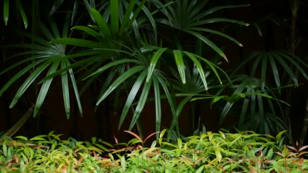 Blurred close up, bright juicy exotic tropical jungle leaves texture backdrop, copyspace. Lush foliage in garden. Abstract natural dark green vegetation background pattern, wild summer rain forest.