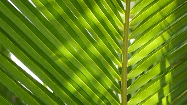 Rozmazané zblízka, jasně šťavnaté exotické tropické džungle listy textury pozadí, kopírovací prostor. Bujné listí v zahradě. Abstraktní přírodní tmavě zelená vegetace pozadí vzor, divoké letní deštné pralesy.
